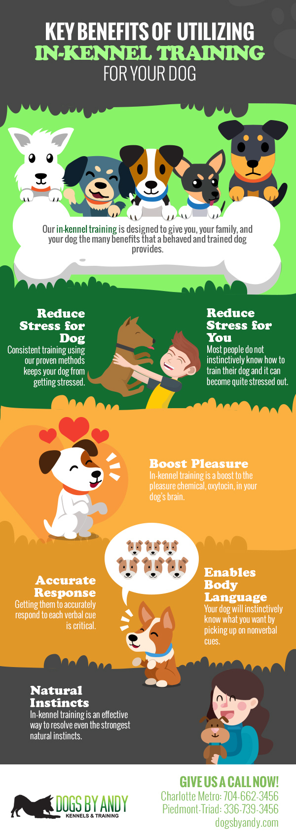 Key Benefits of Utilizing In-Kennel Training for Your Dog [infographic]