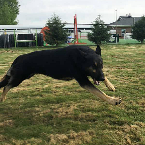 Guard Dog Training in Mooresville, North Carolina