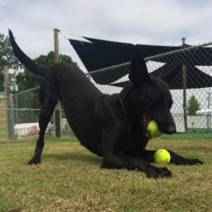 Dog Training Services in Mooresville, North Carolina