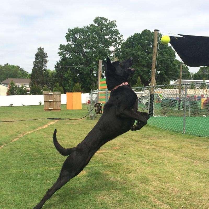 Dog Training Classes in Davidson, North Carolina