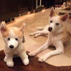Danica's Dallas Dog Plush Toy