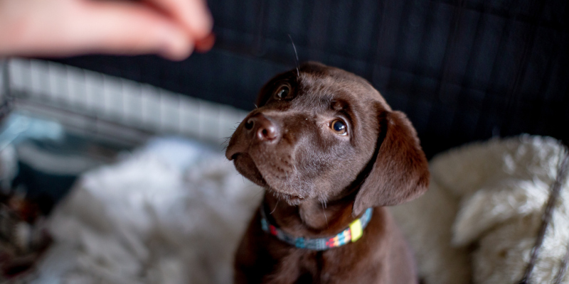 A great place to begin your search for suitable puppy kennels