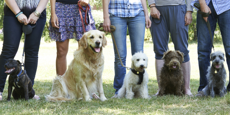 turn to professional dog training classes