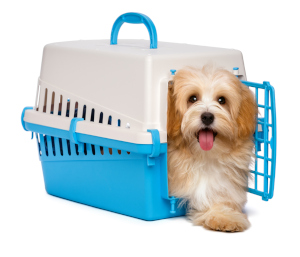 it is generally better to have separate dog kennels for each pet
