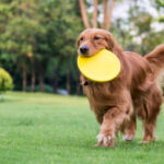 Dog Obedience Training in Mooresville, North Carolina