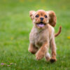Puppy Obedience Training in Mooresville, North Carolina