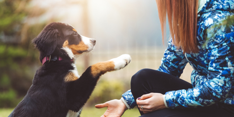 every puppy can benefit from puppy training from professionals