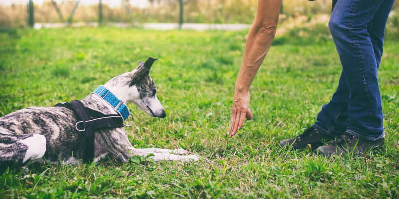 work with a professional dog trainer