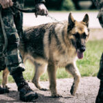 Dog training in the military is actually a two-step process